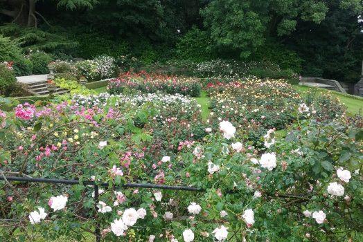 The Rose Garden at Tissington