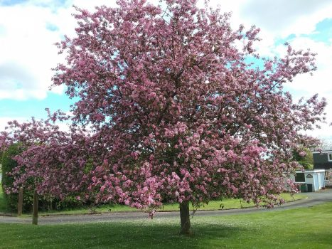 Vale of Evesham, Worcestershire - The Blossom Trail (03-JKW_NCN)