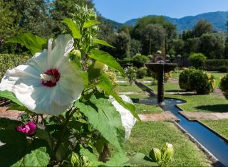 Italy, Tuscany, Lucca, Villa Reale, Gardens and Flowers NCN