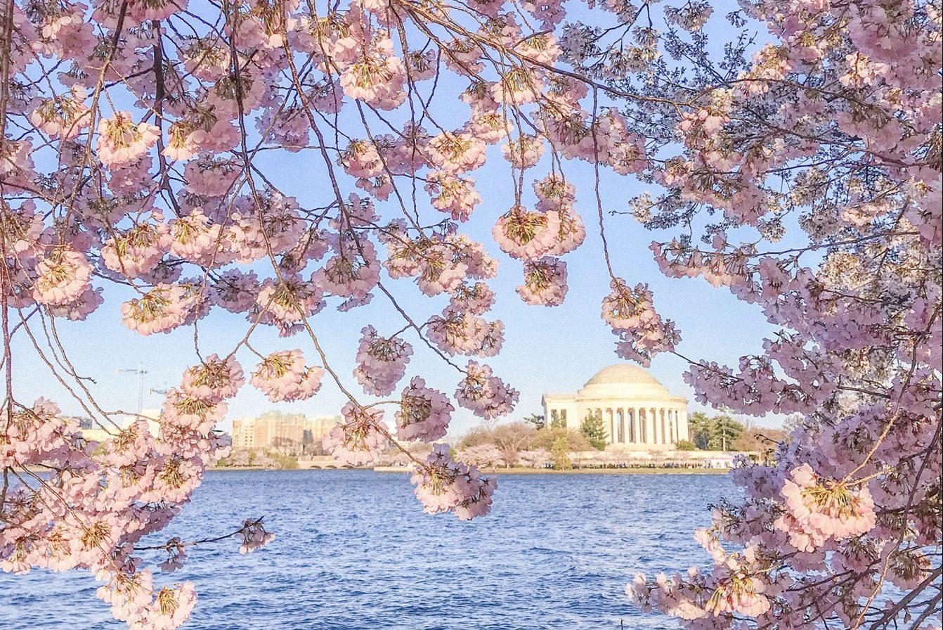 Cherry Blossom Festival U S Gardens Greatdays Group Travel