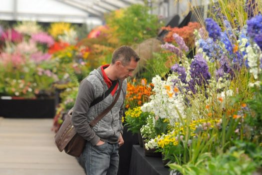 Visitor at Harrogate's Autumn Flower Show ©Courtesy of Harrogate Flower Shows