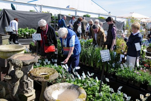 Spring plant markets at Harrogate Flower Show ©Courtesy of Harrogate Flower Shows